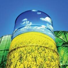 biodiesel problems
