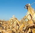 ethanol fuel roblems